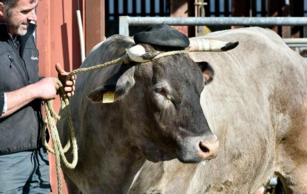 l-eleveur-joel-sillac-et-sa-vache-cerise-coiffee-d-un-beret-_2507284