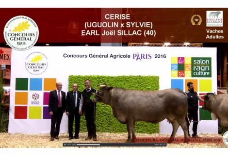 1er prix race bazadaise concours general paris 2016 cerise